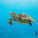 英会話Tips ハワイ日記3イルカと一緒に泳いでみた